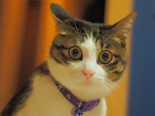 怯える 猫